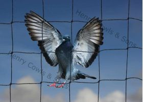 Knotted 50mm Pigeon Netting